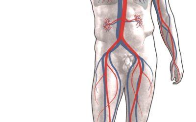 La santé cardio-vasculaire