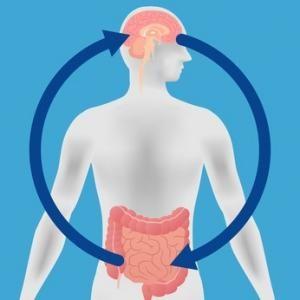 lien microbiote intestinal et alzheimer
