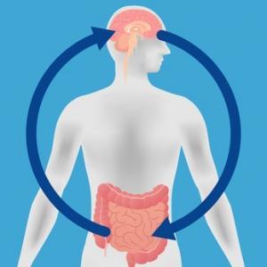 Un lien entre le microbiote intestinal et la maladie d'Alzheimer